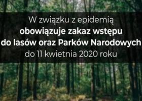 Zakaz wstępu do lasów w związku z epidemią koronawirusa