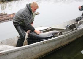 Świeże ryby już w sprzedaży